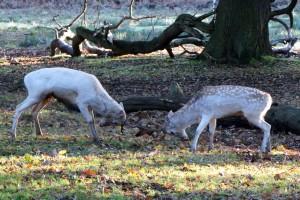 Photo Credit: Bradgate Park Trust